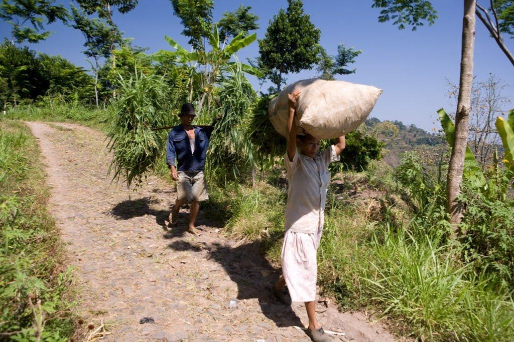 argopuro_argapuro-farmers