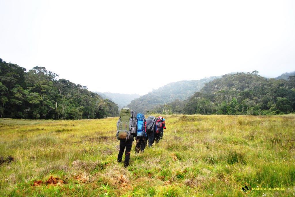 journey-to-savanna