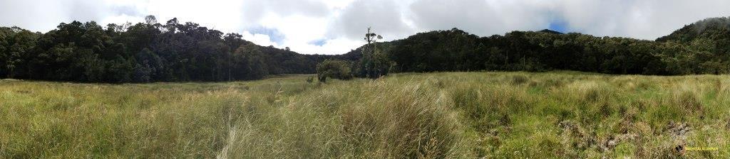 large-savanna