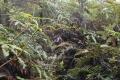 marapi true peak 060