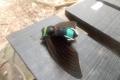 131 A headless cicada at Camp 1