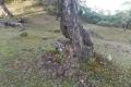 east timor 700