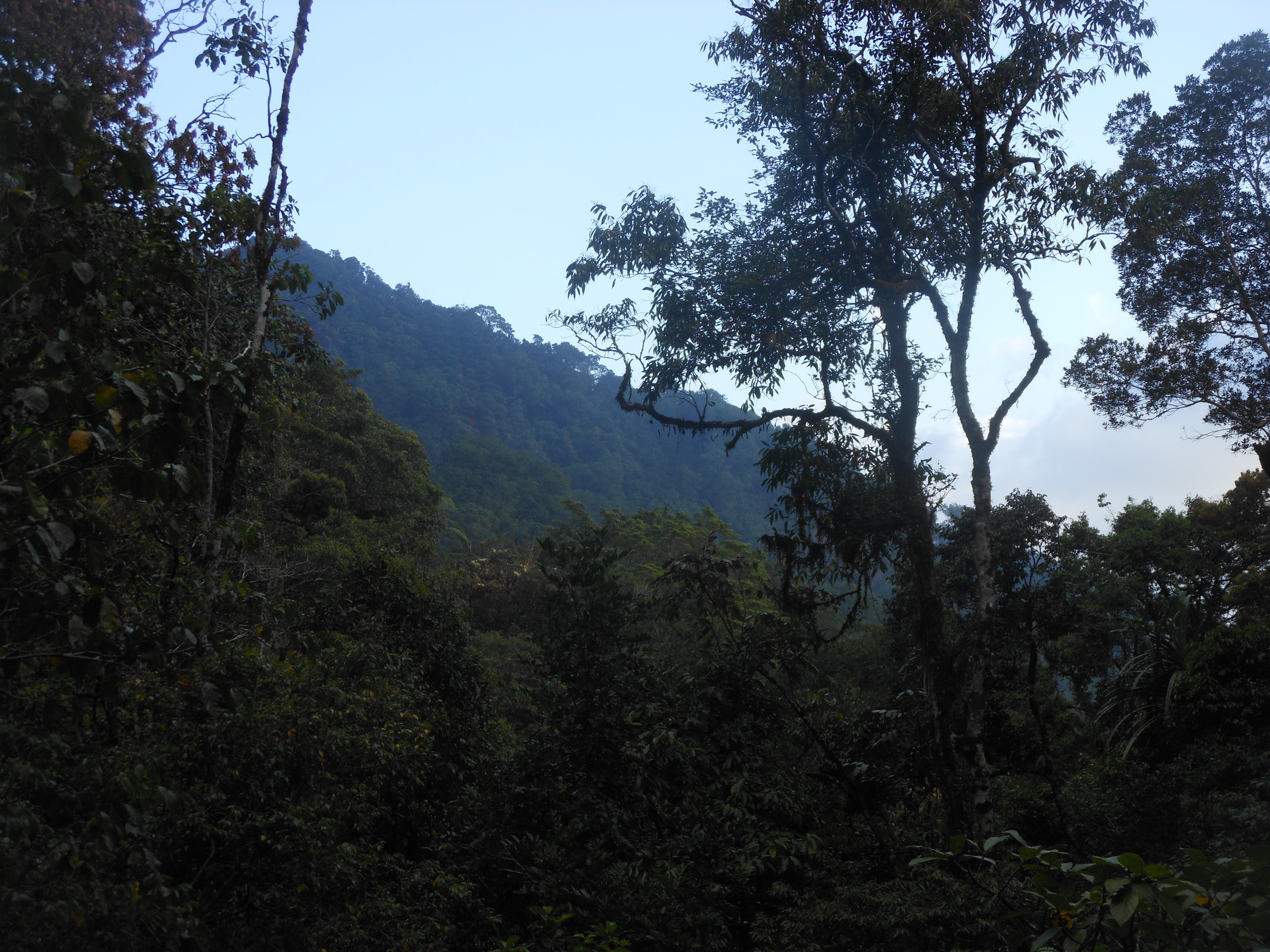 tondongkarambu-168