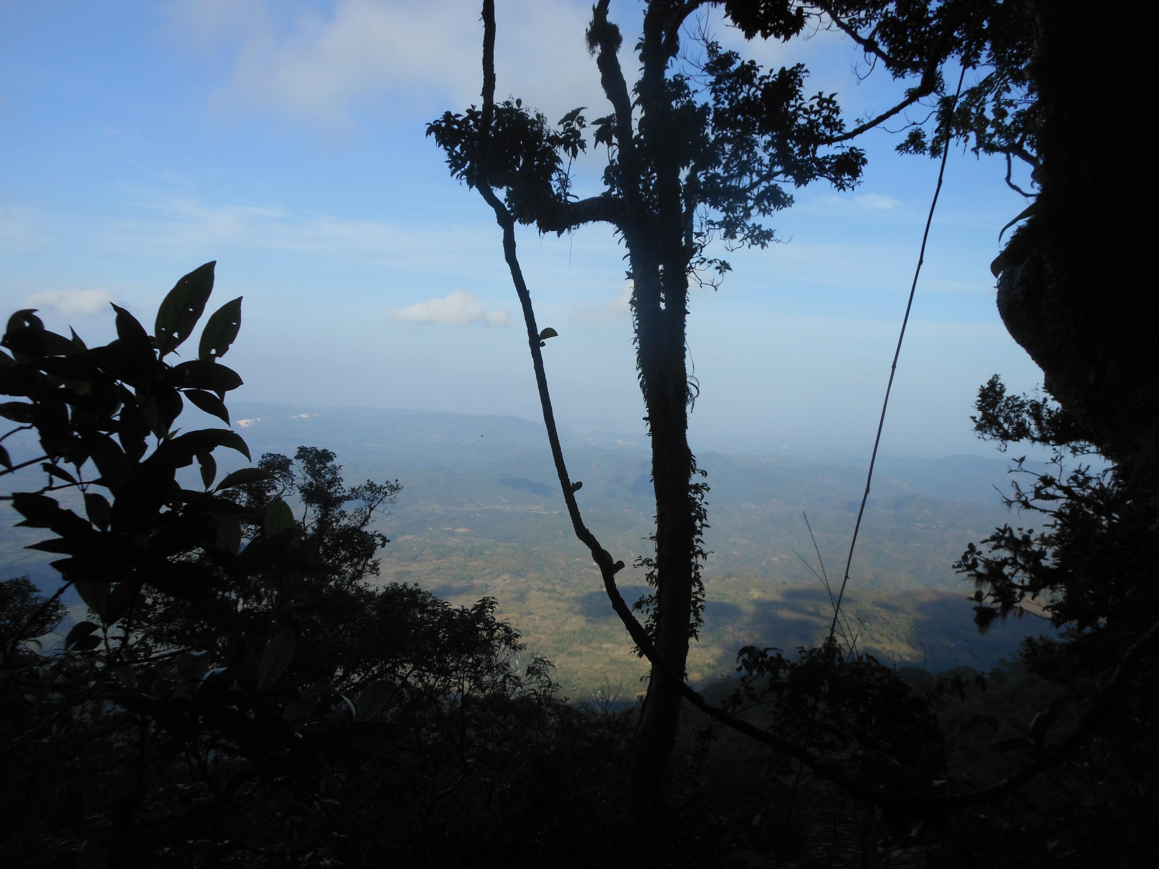 tondongkarambu 184