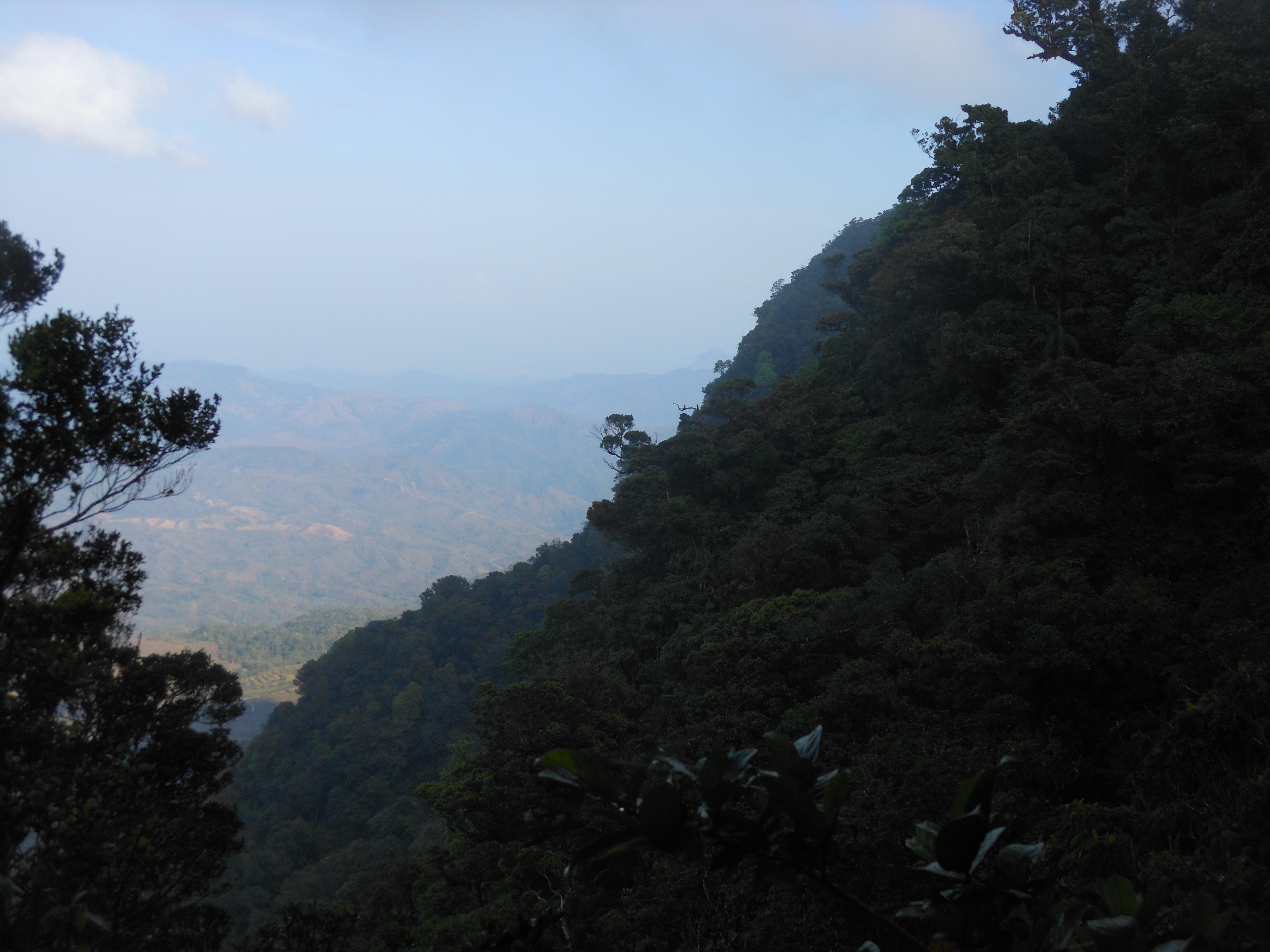 tondongkarambu 193