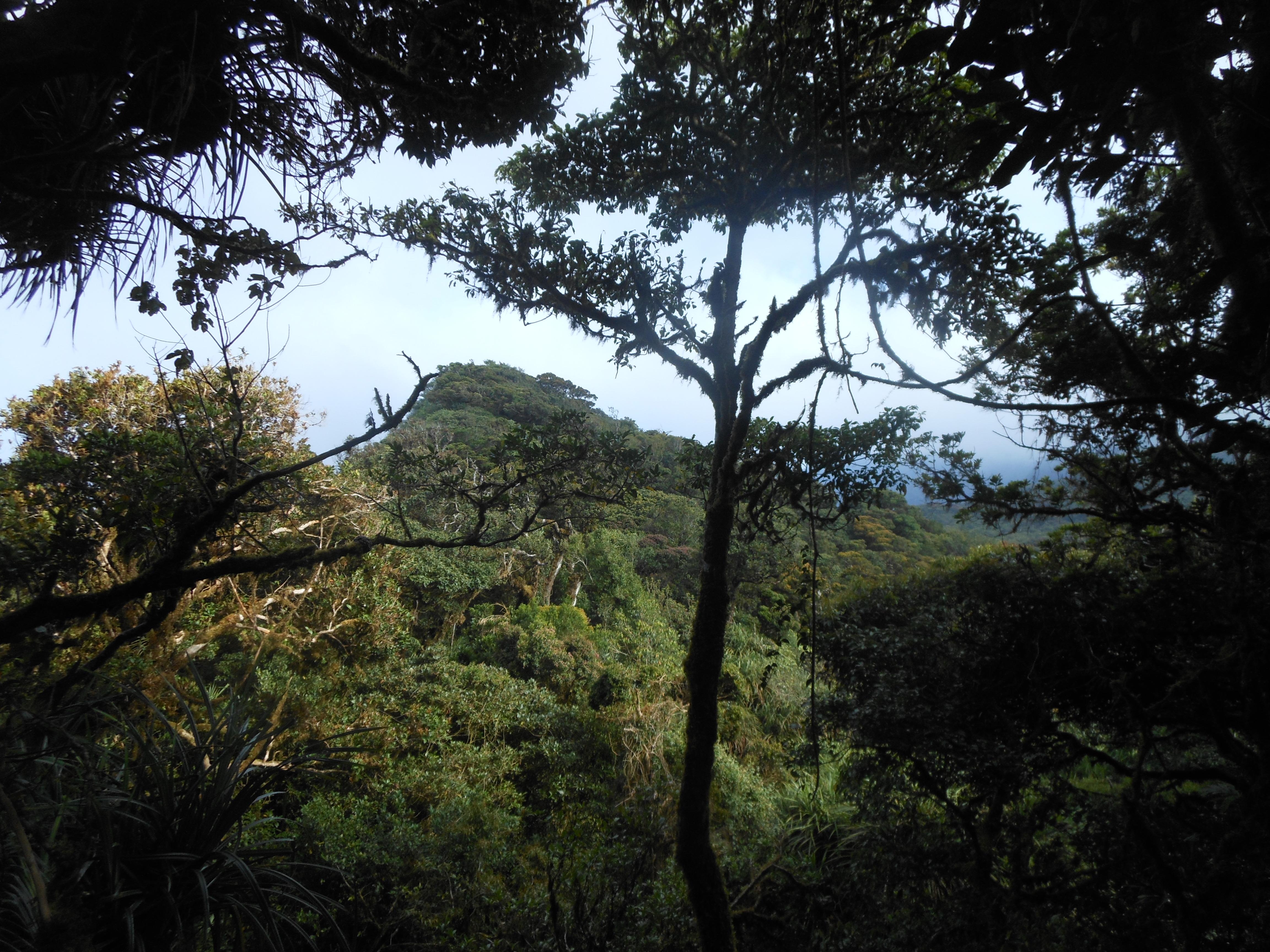 tondongkarambu 214