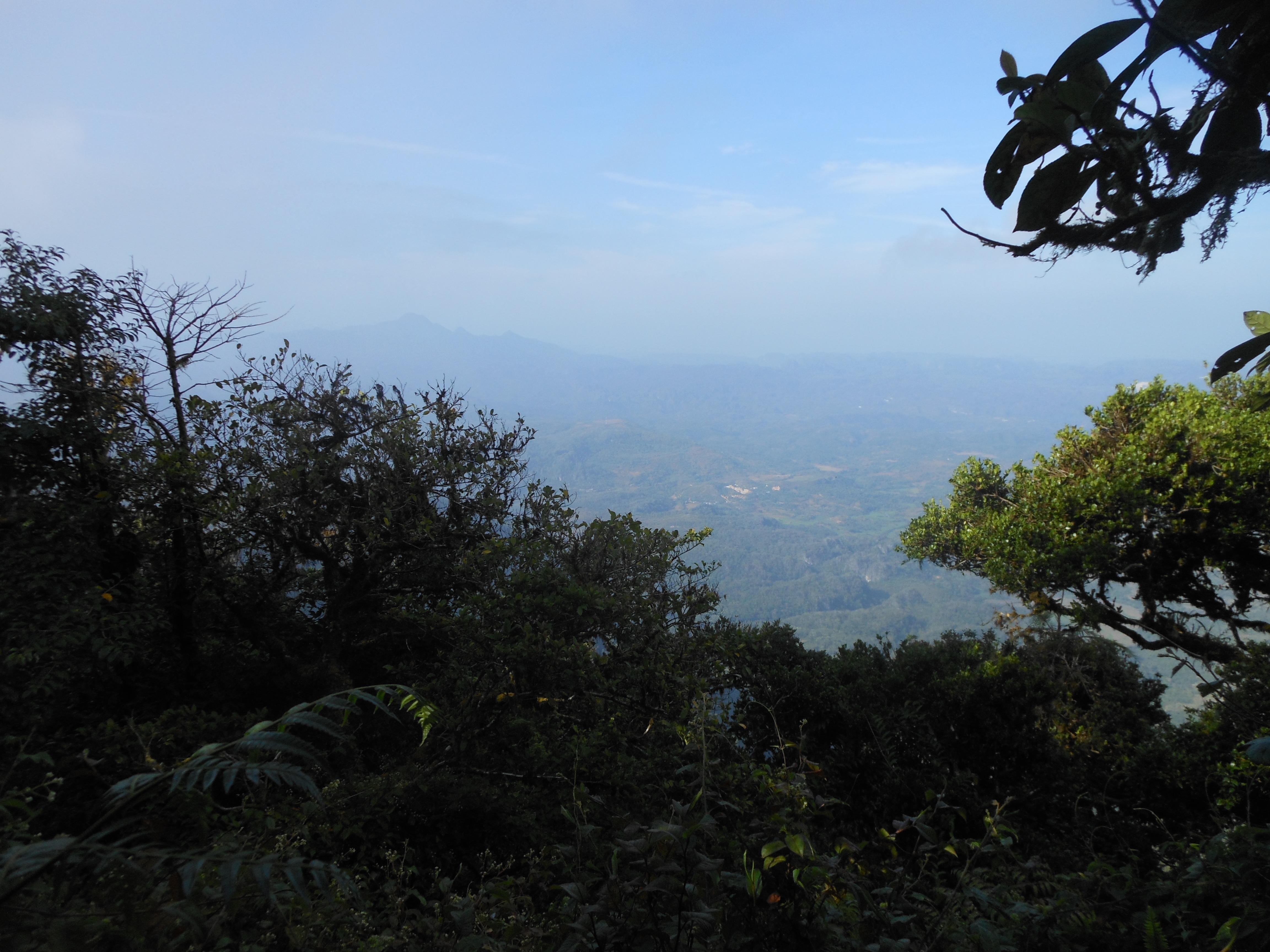 tondongkarambu 220