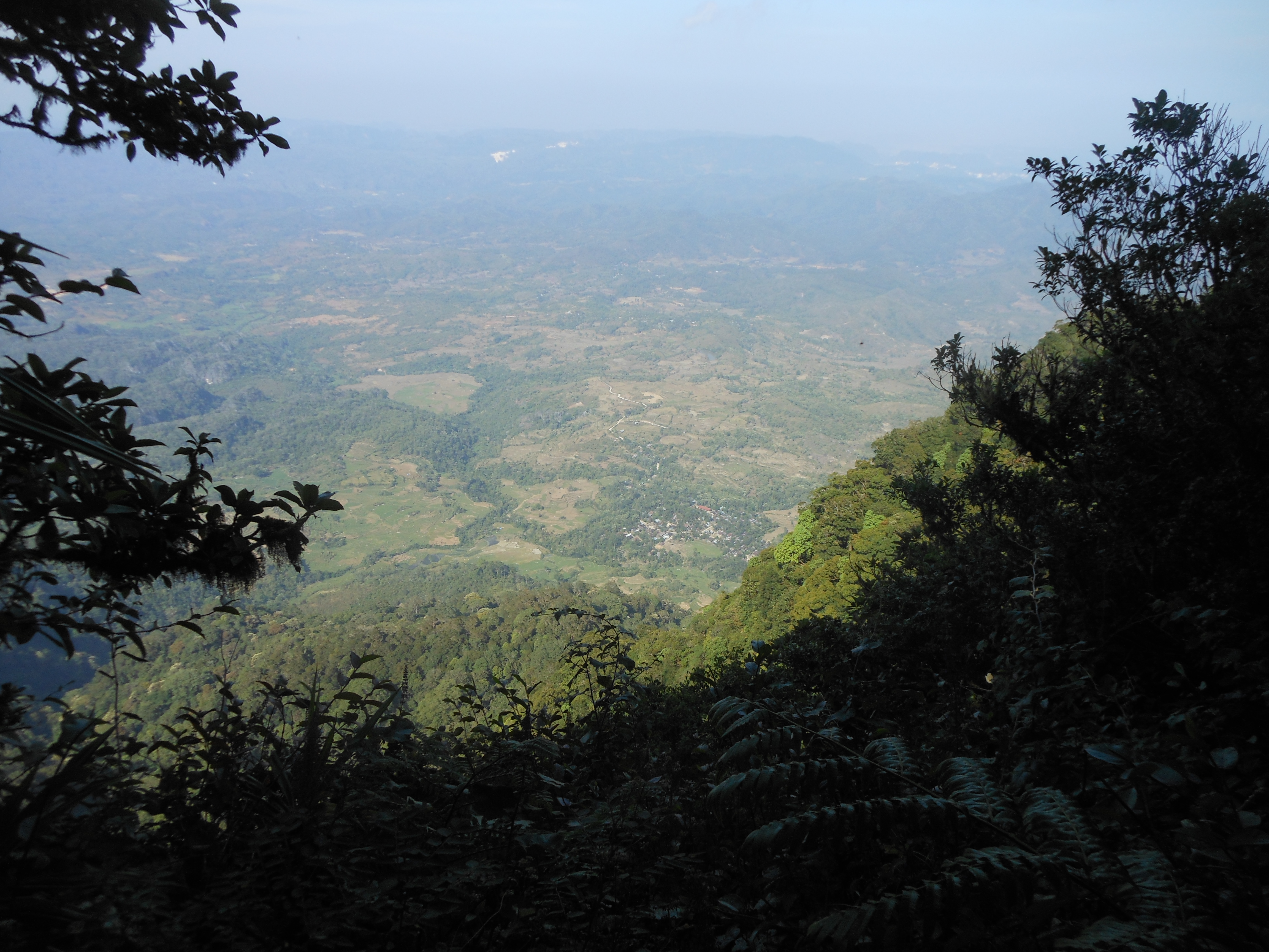 tondongkarambu 257
