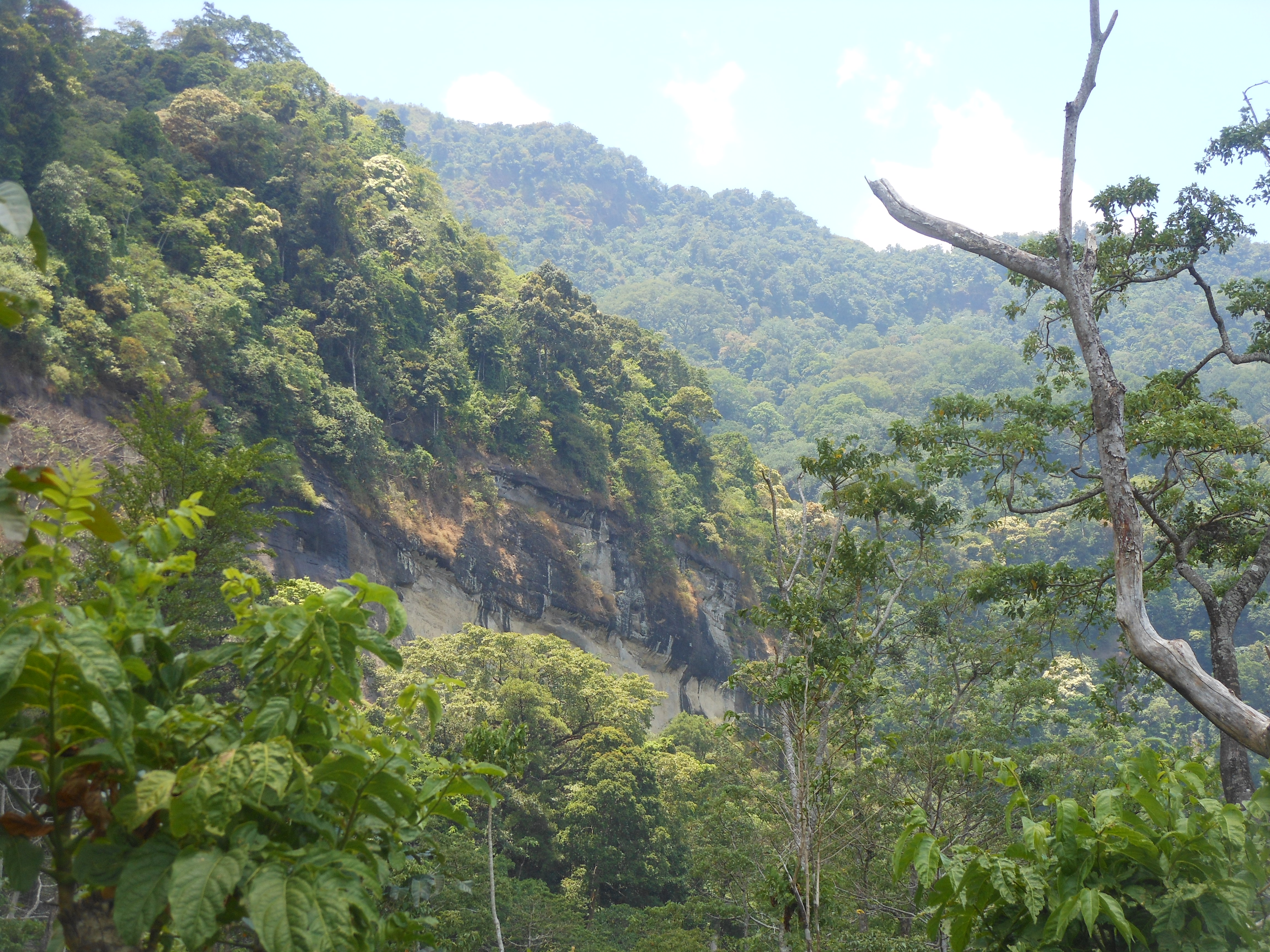tondongkarambu 329