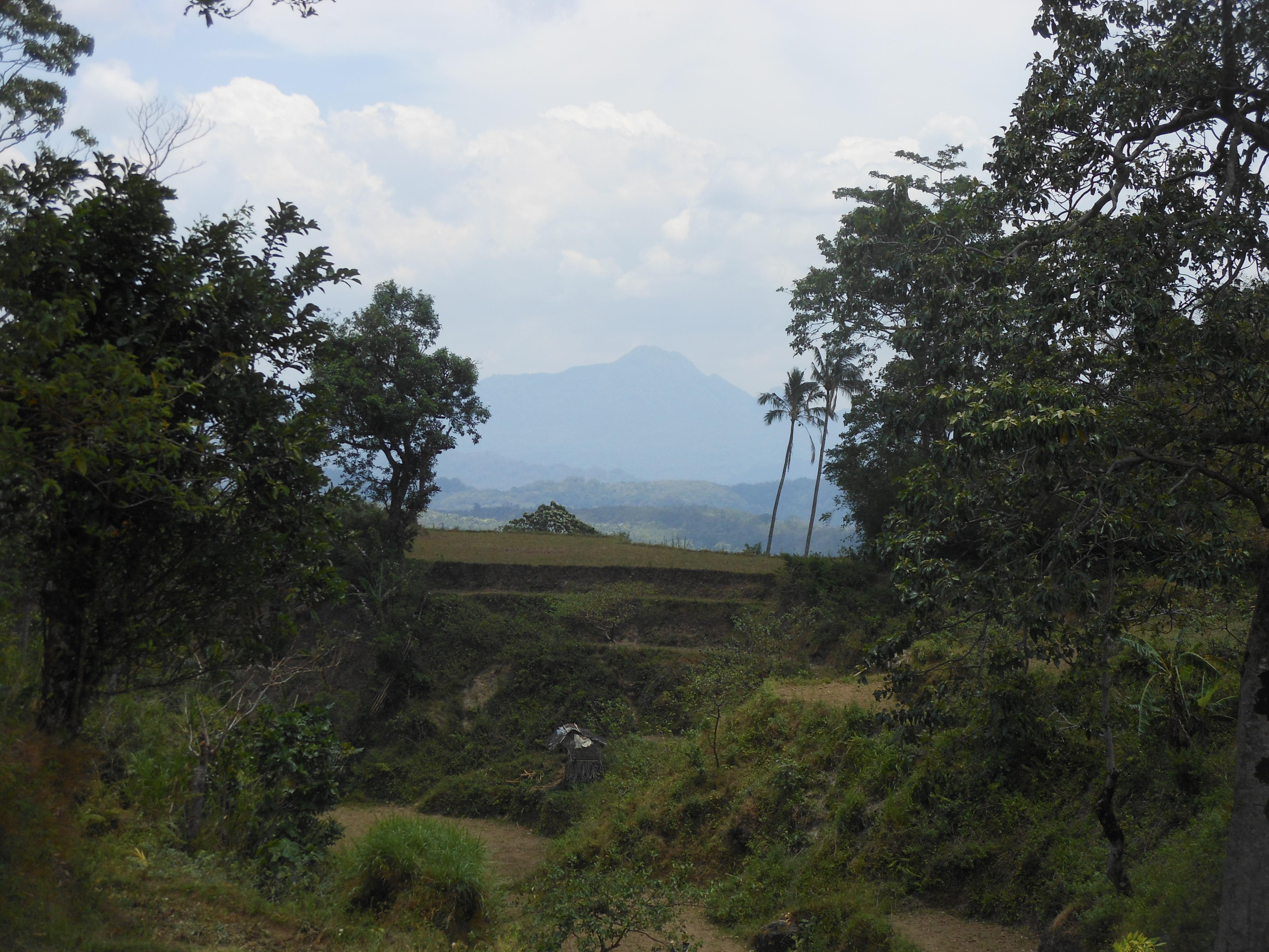 tondongkarambu 344