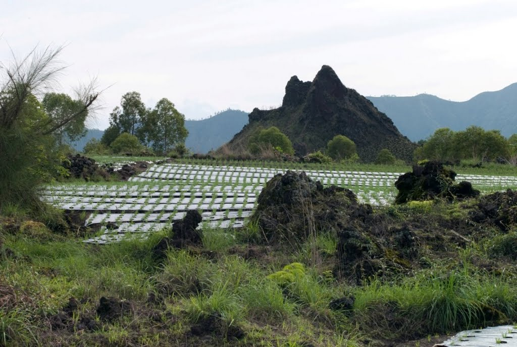 batur-vegetable-farming