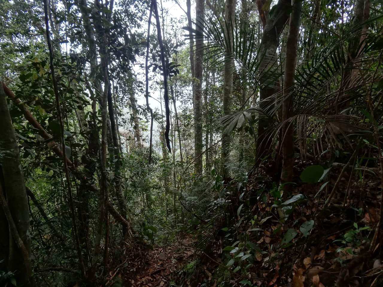 16 Gunung Korbu forest on it's lower parts
