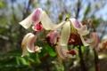 11 Some beautiful flowers on gunung Korbu