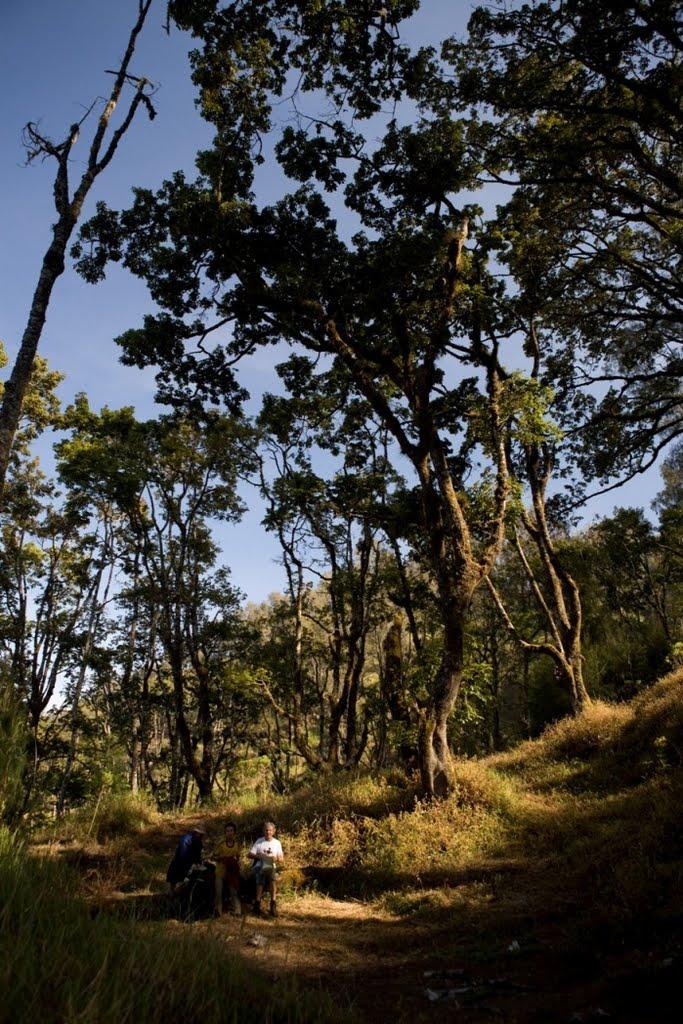 argopuro_argapuro-pos-in-the-woods