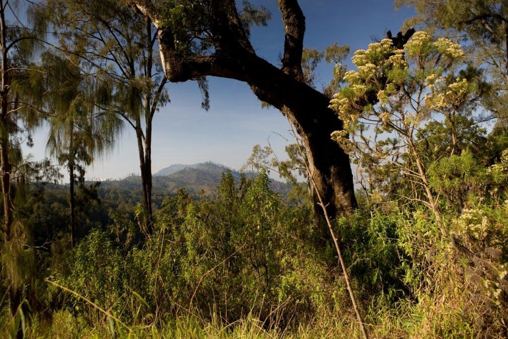 argopuro_argapuro-stunning-high-altitude-forests-2