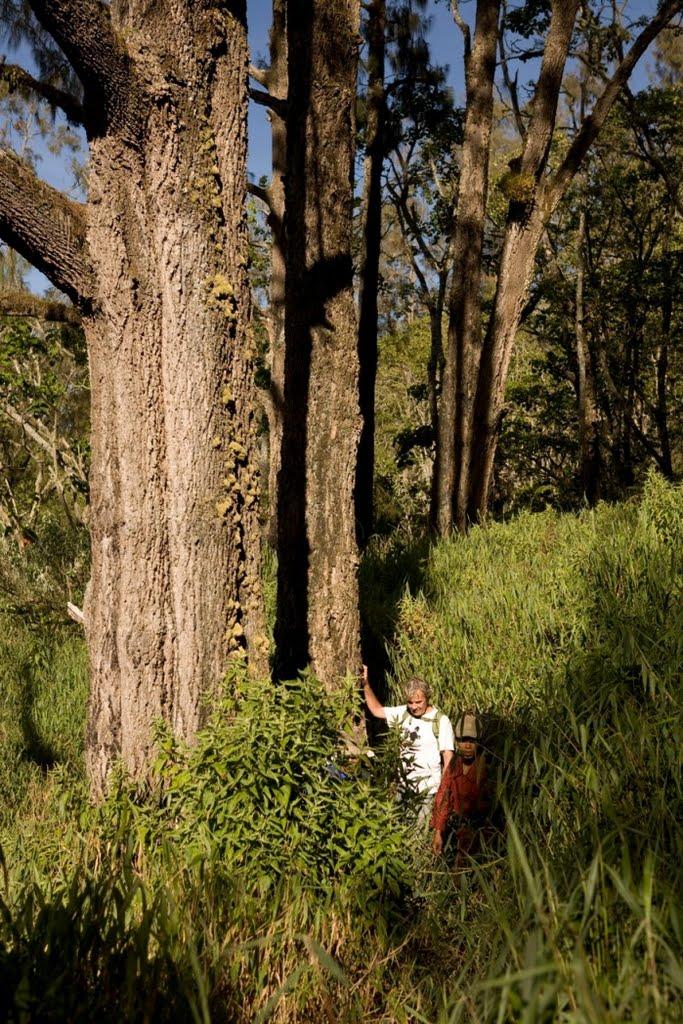 argopuro_argapuro-stunning-high-altitude-forests