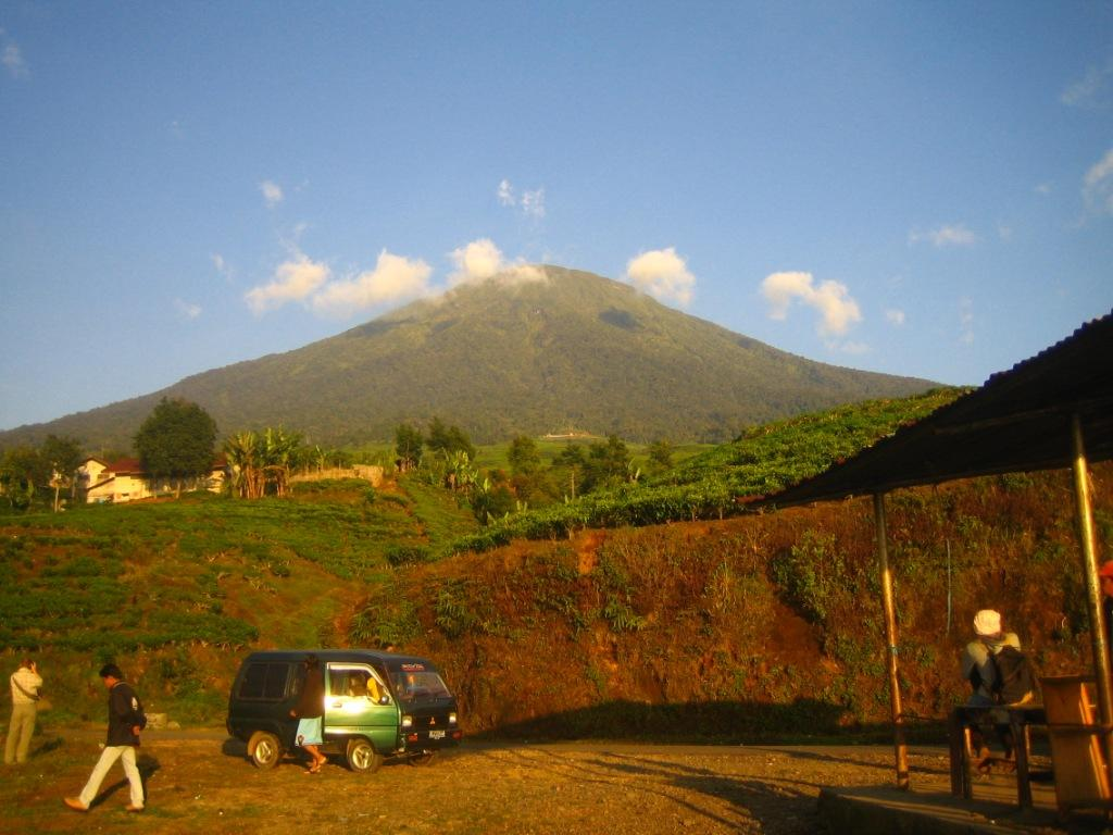 dempo-and-the-tea-plantation