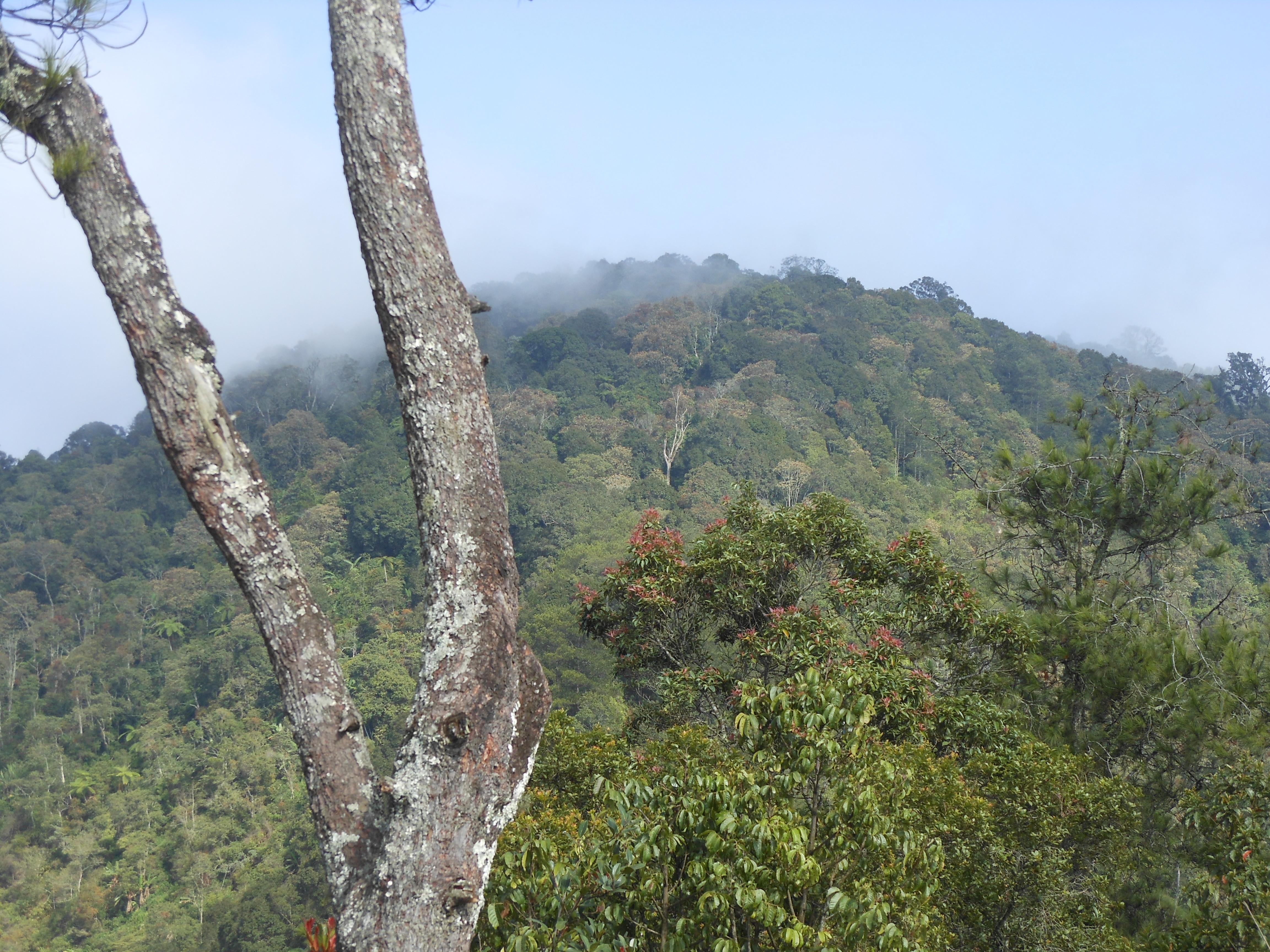 manglayang 081