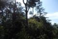 manglayang 106