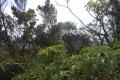 marapi true peak 061