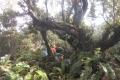 marapi true peak 068
