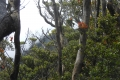 marapi true peak 071