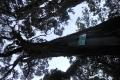 marapi true peak 093