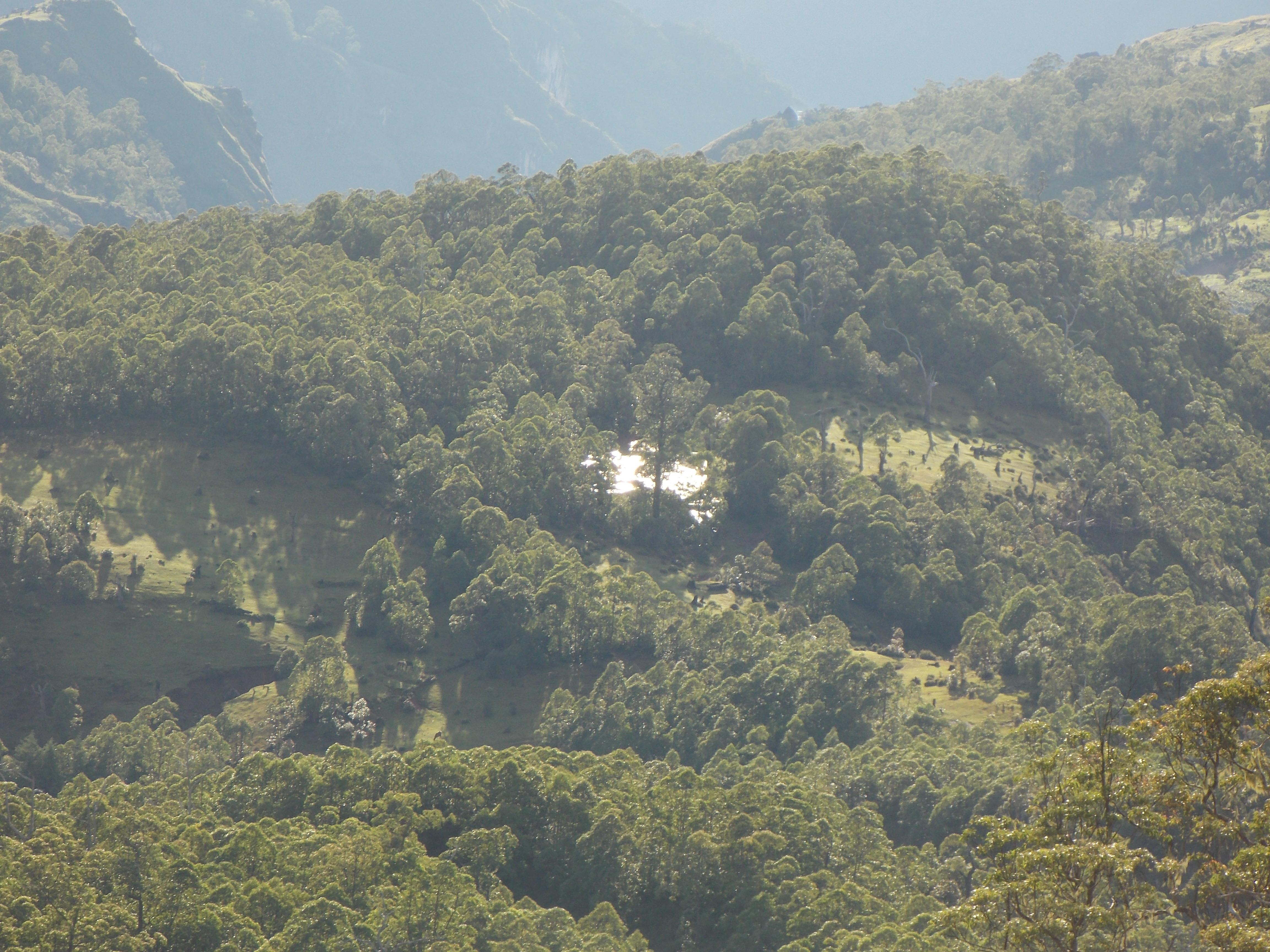 east timor 746