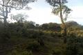 east timor 680