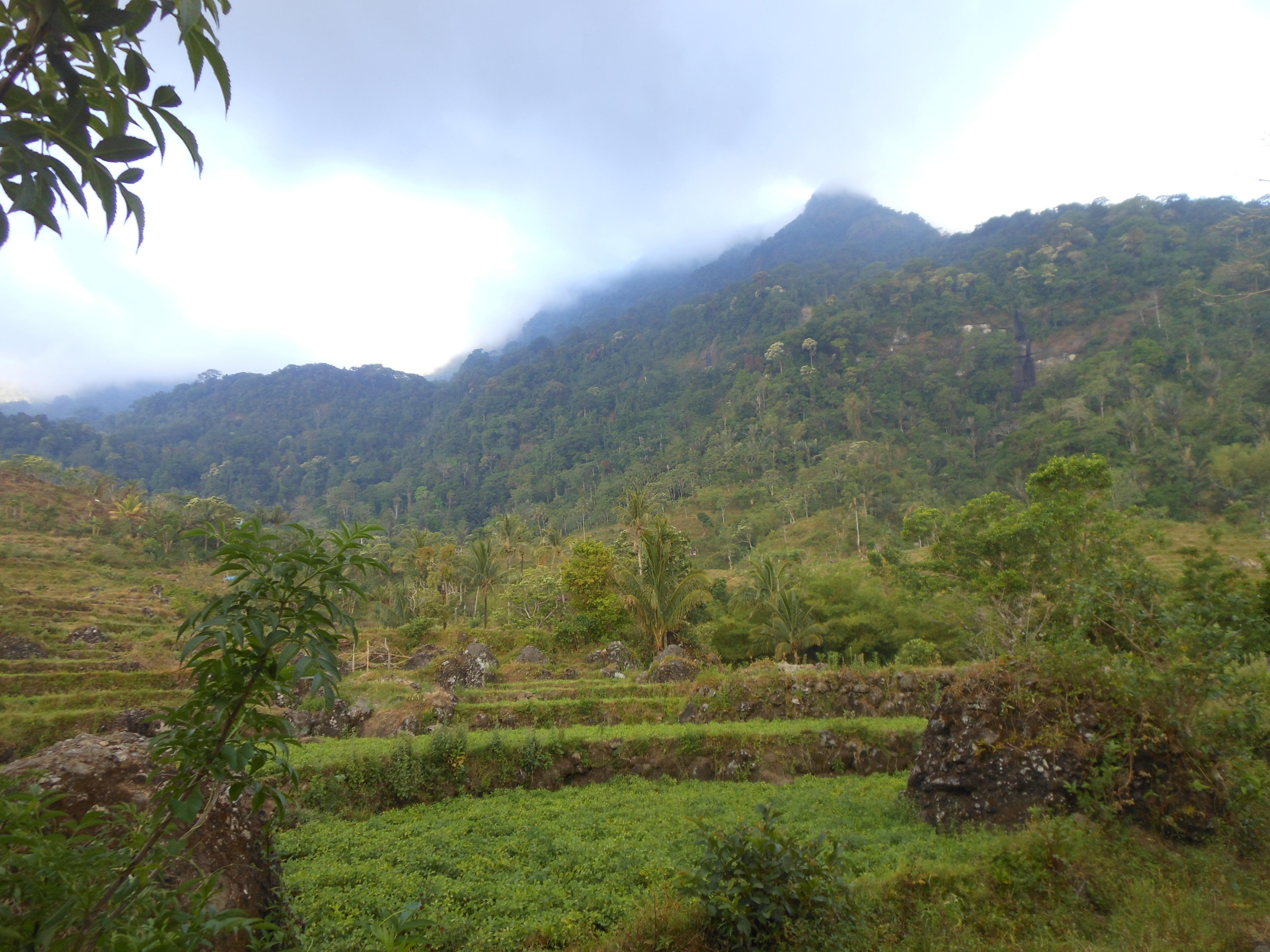 tondongkarambu-140
