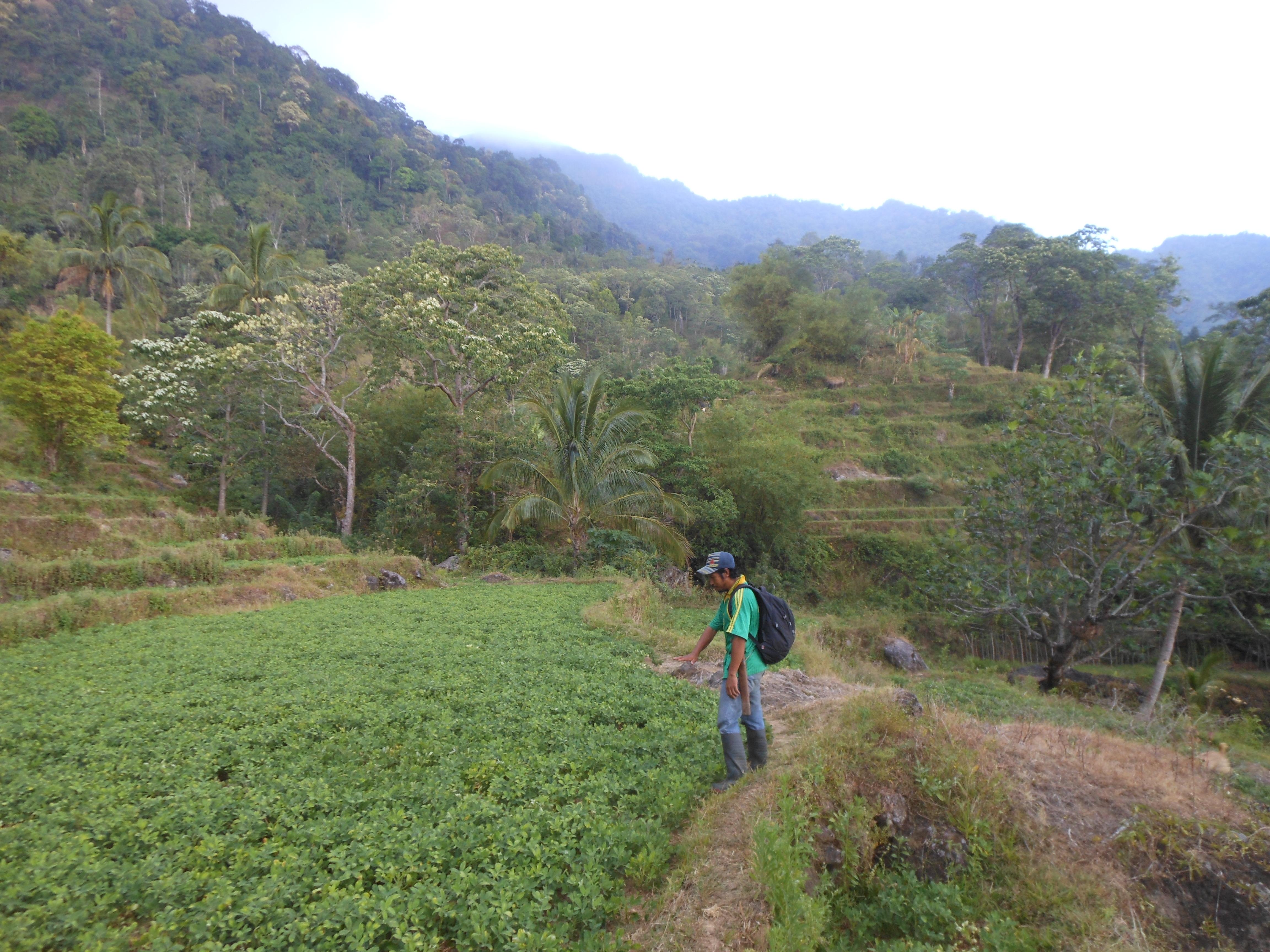 tondongkarambu-143