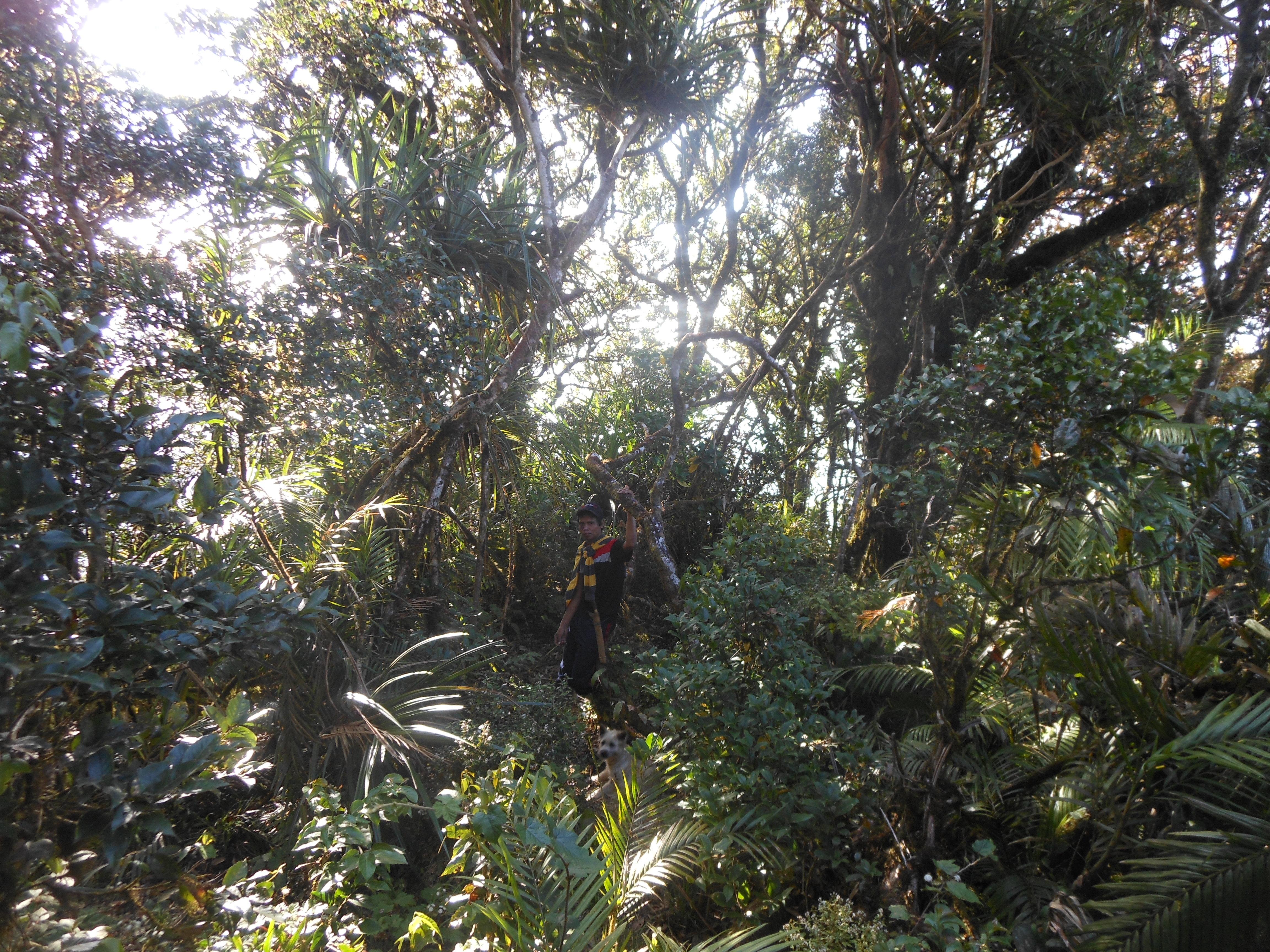 tondongkarambu 197