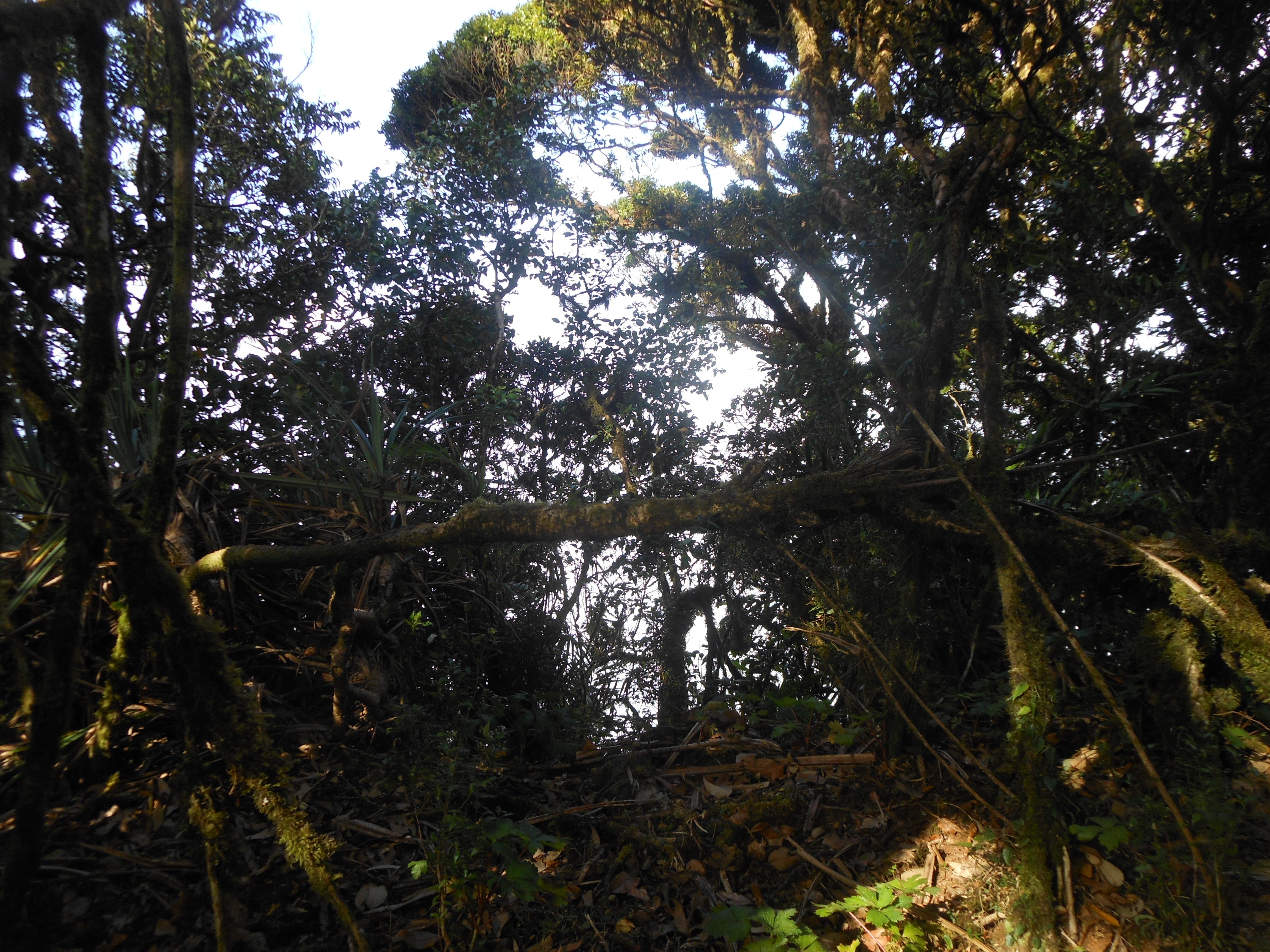 tondongkarambu 210