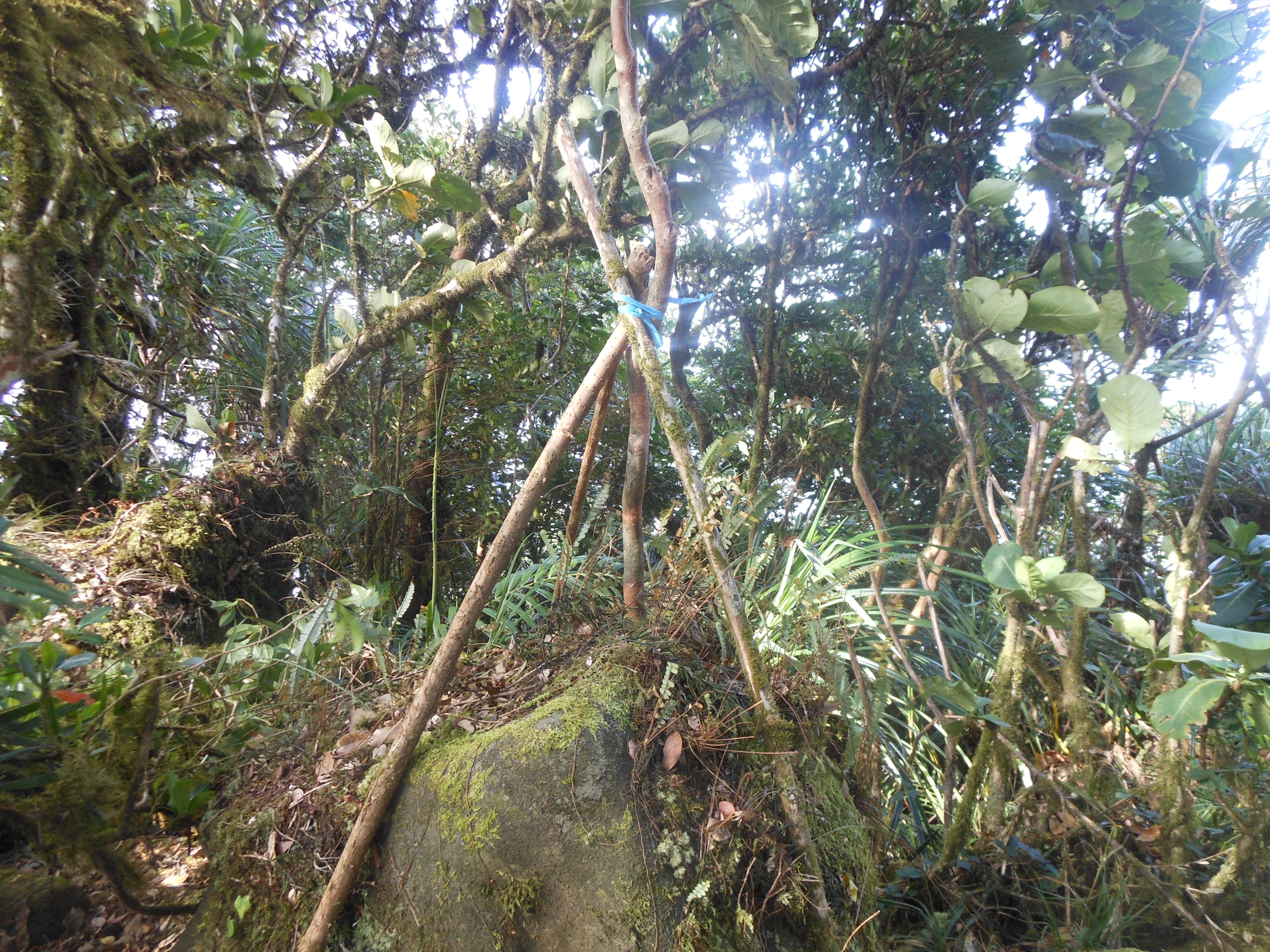 tondongkarambu 246