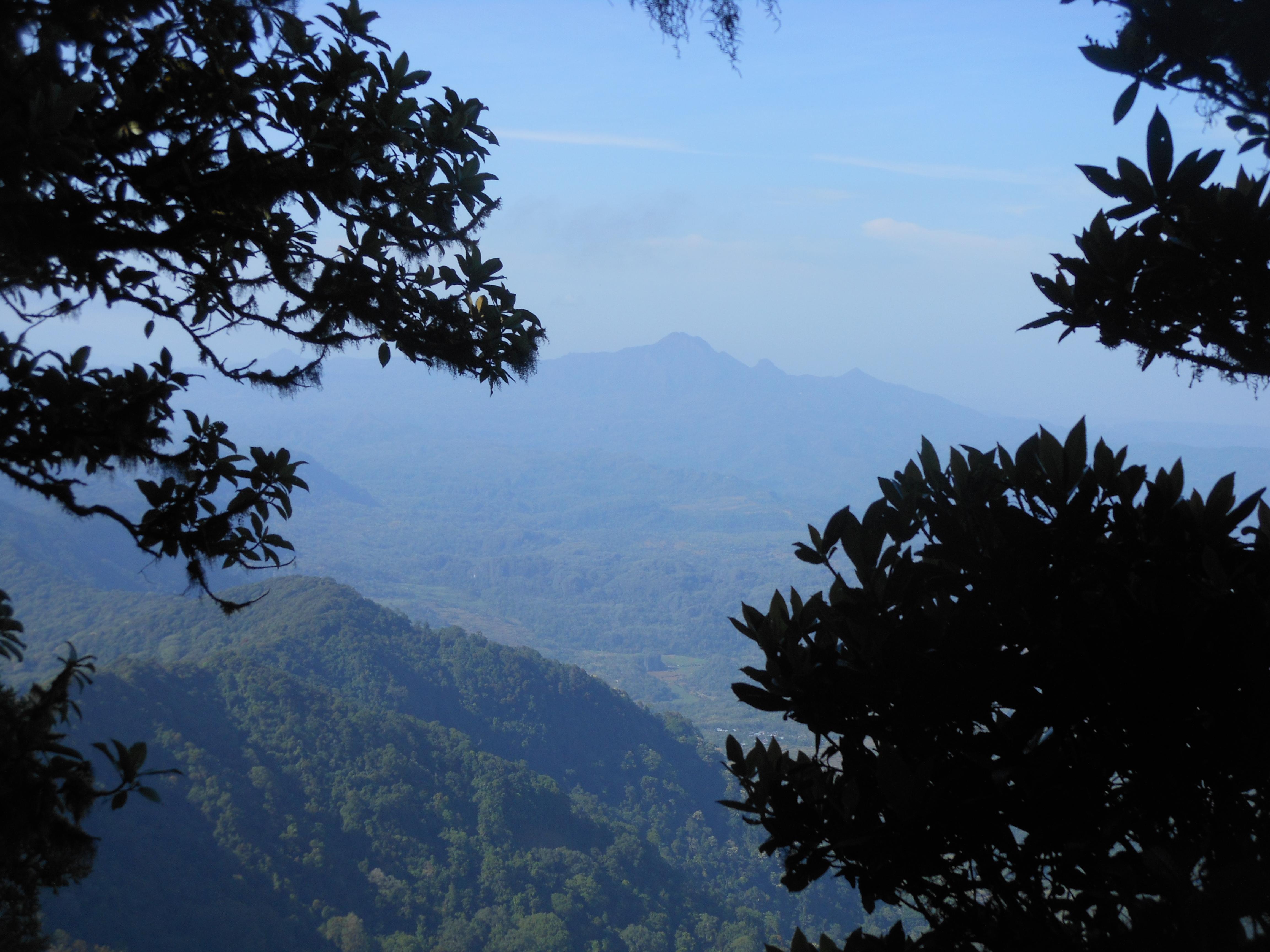 tondongkarambu 260