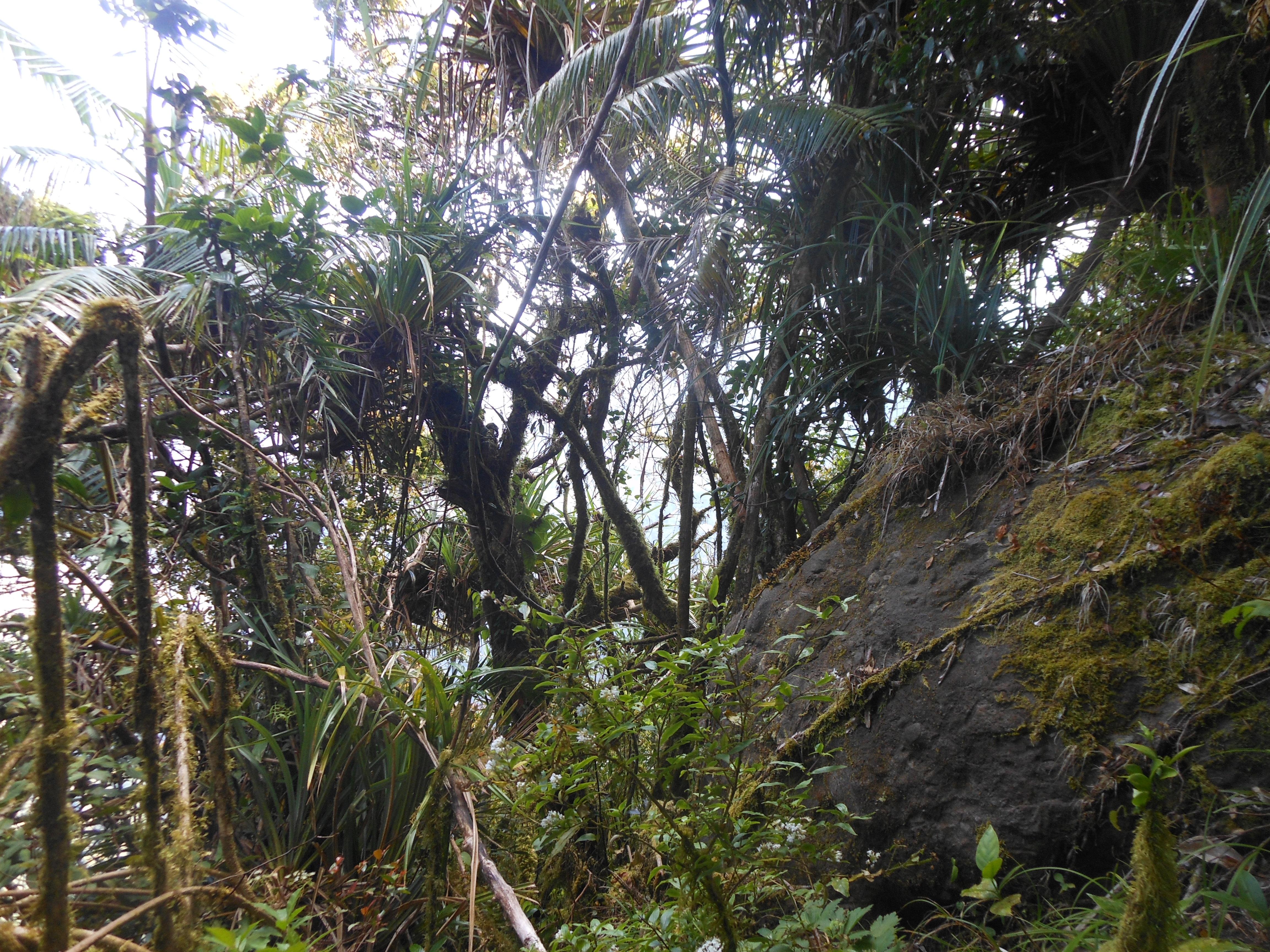 tondongkarambu 265