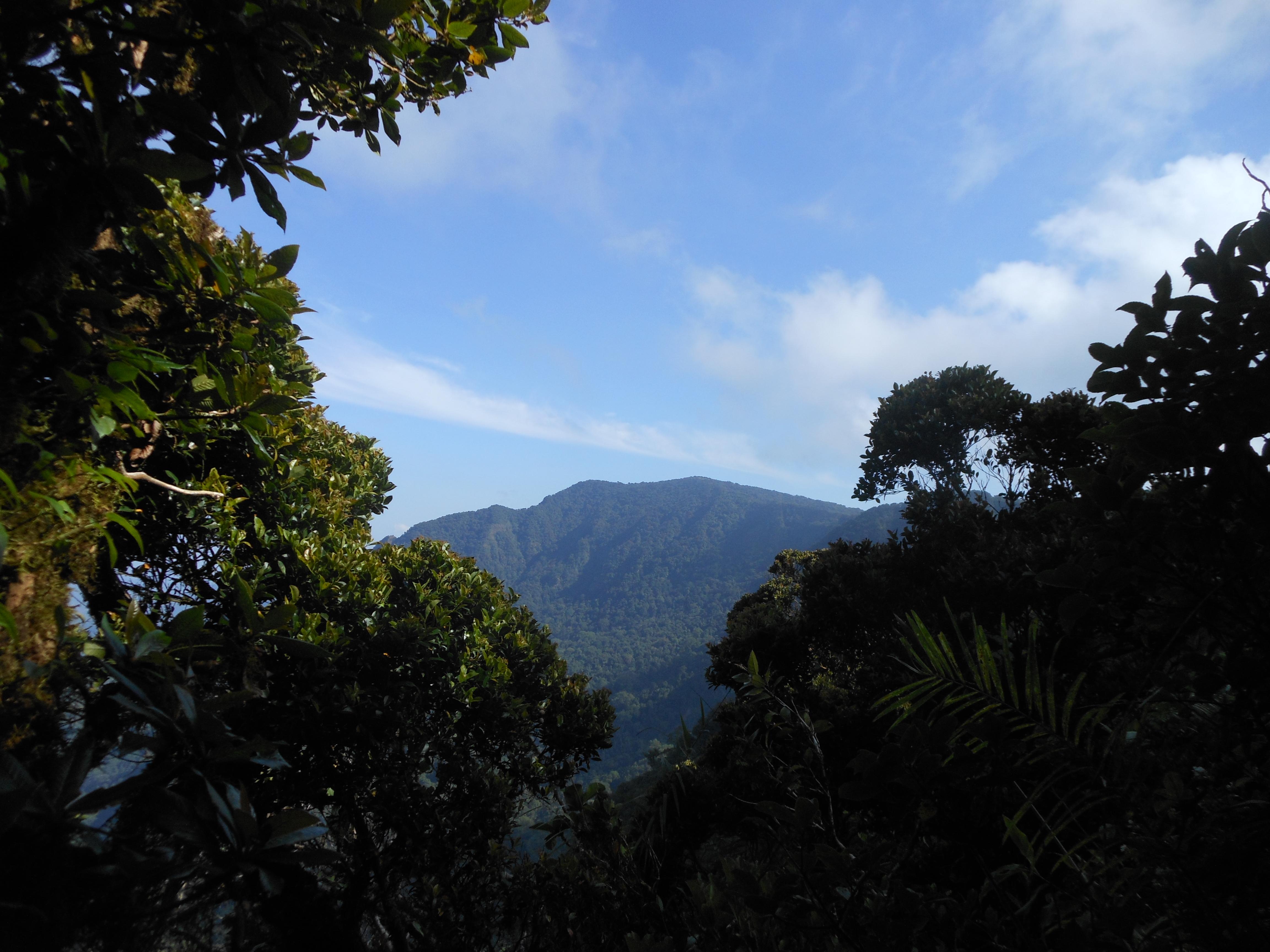 tondongkarambu 266