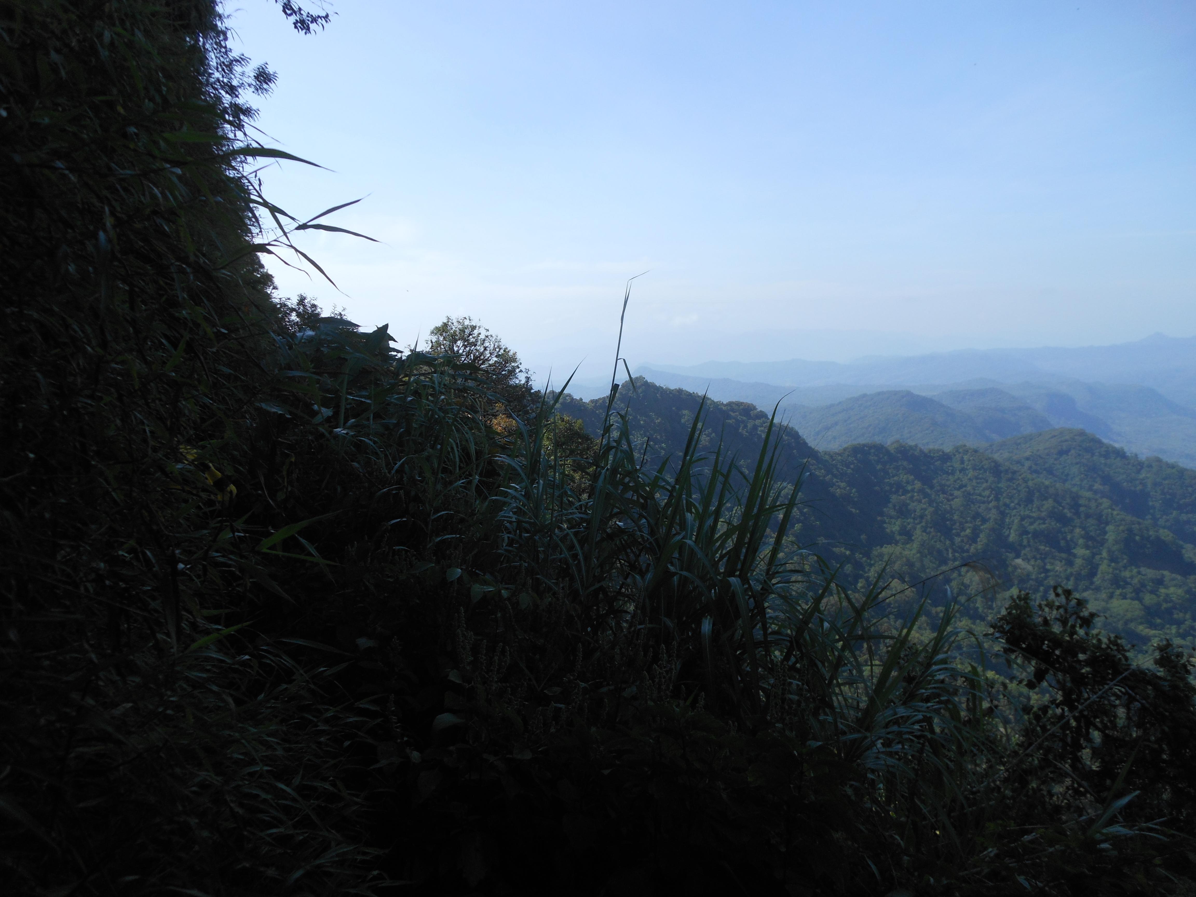 tondongkarambu 288