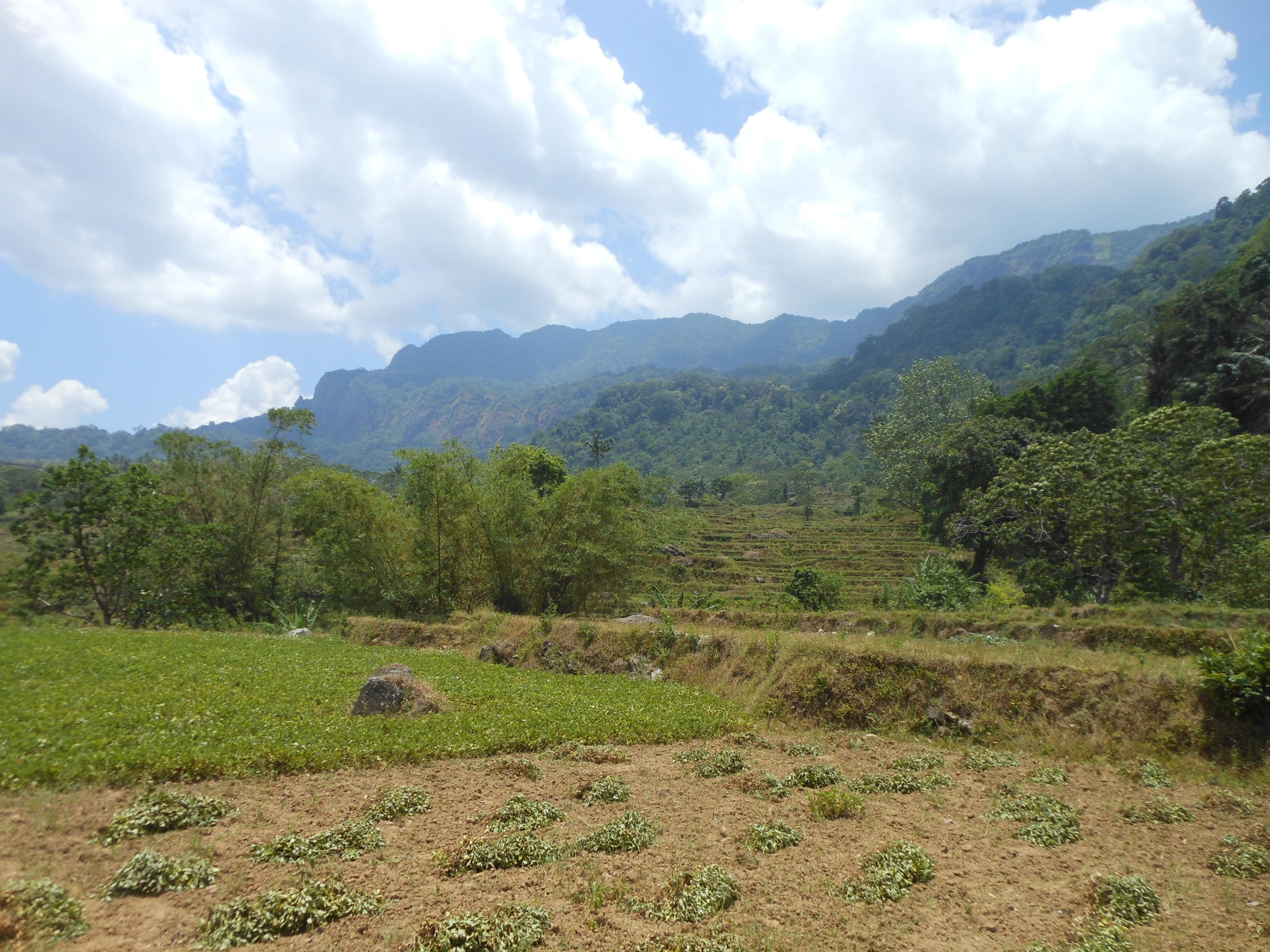 tondongkarambu 346
