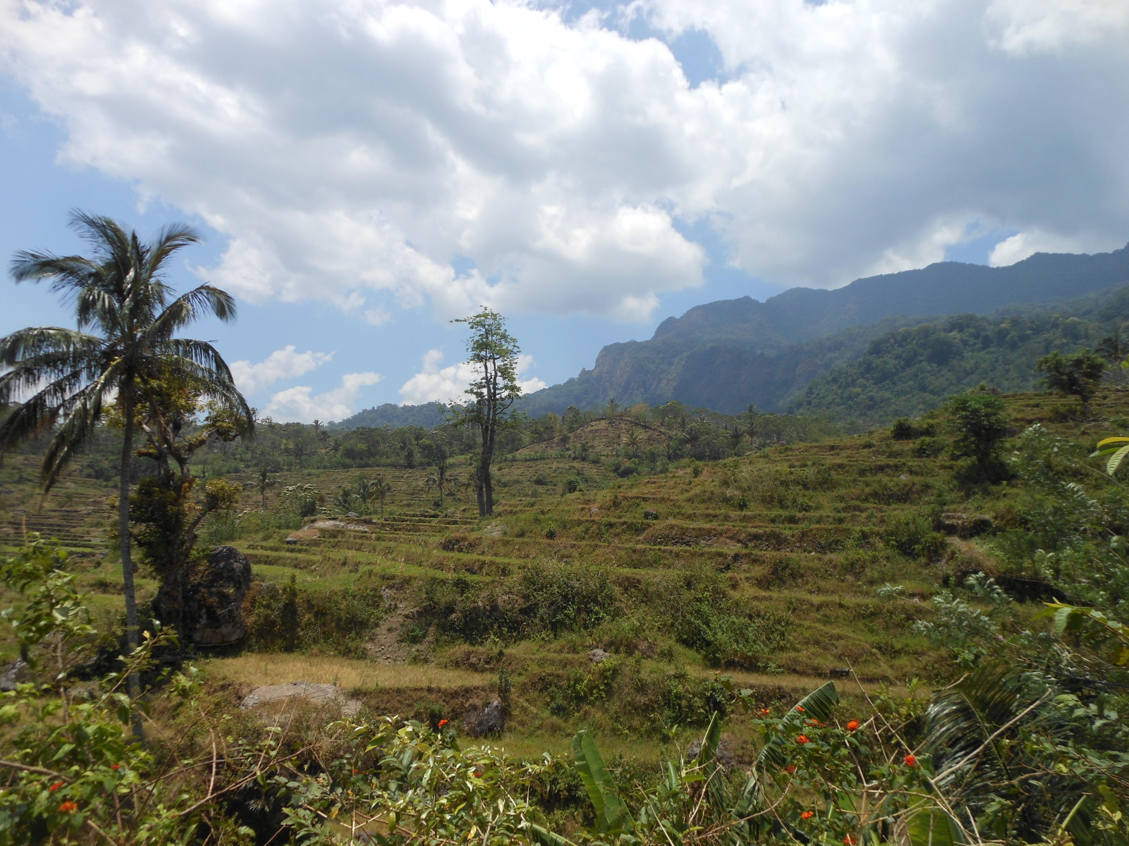 tondongkarambu 354