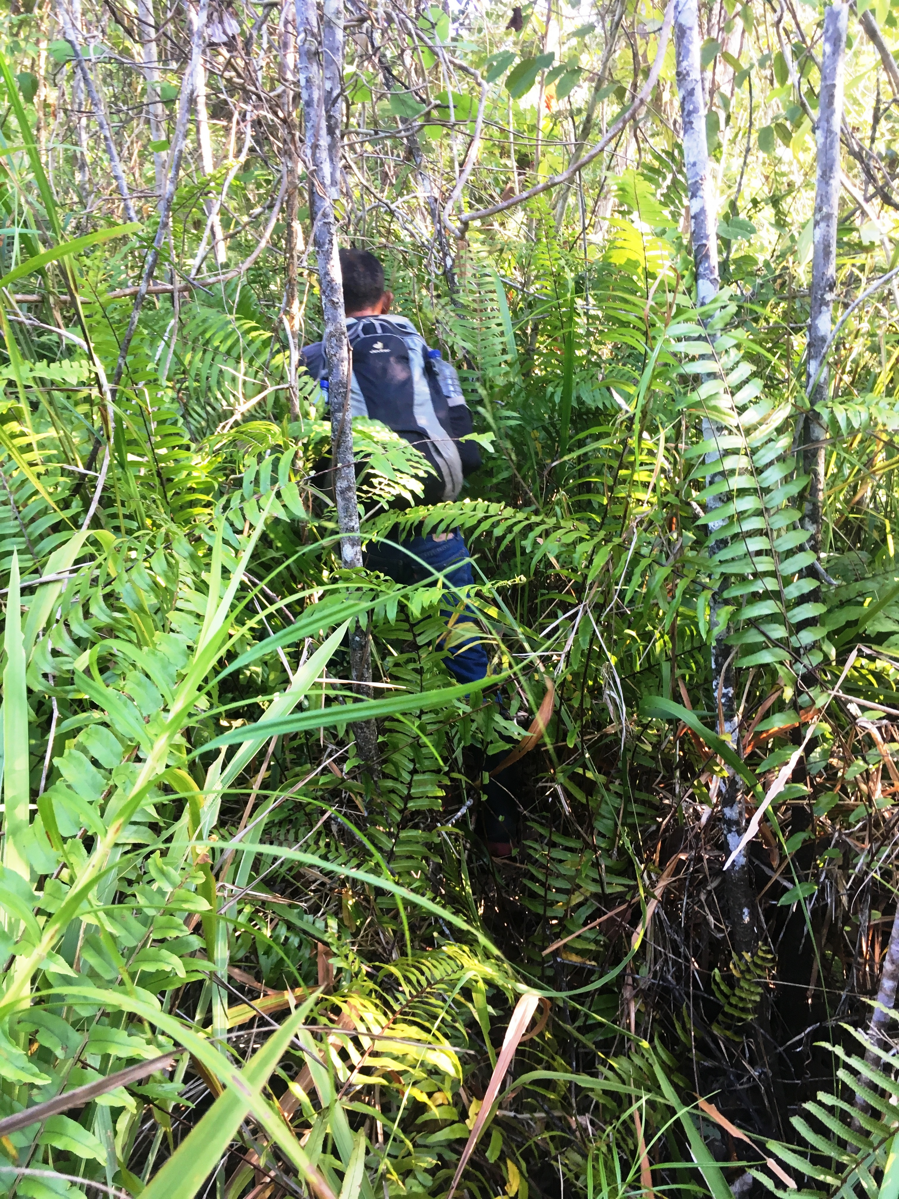 Gunung-Sabatai-Bashing-through-heavy-undergrowth-Nick-Hughes-September-2019