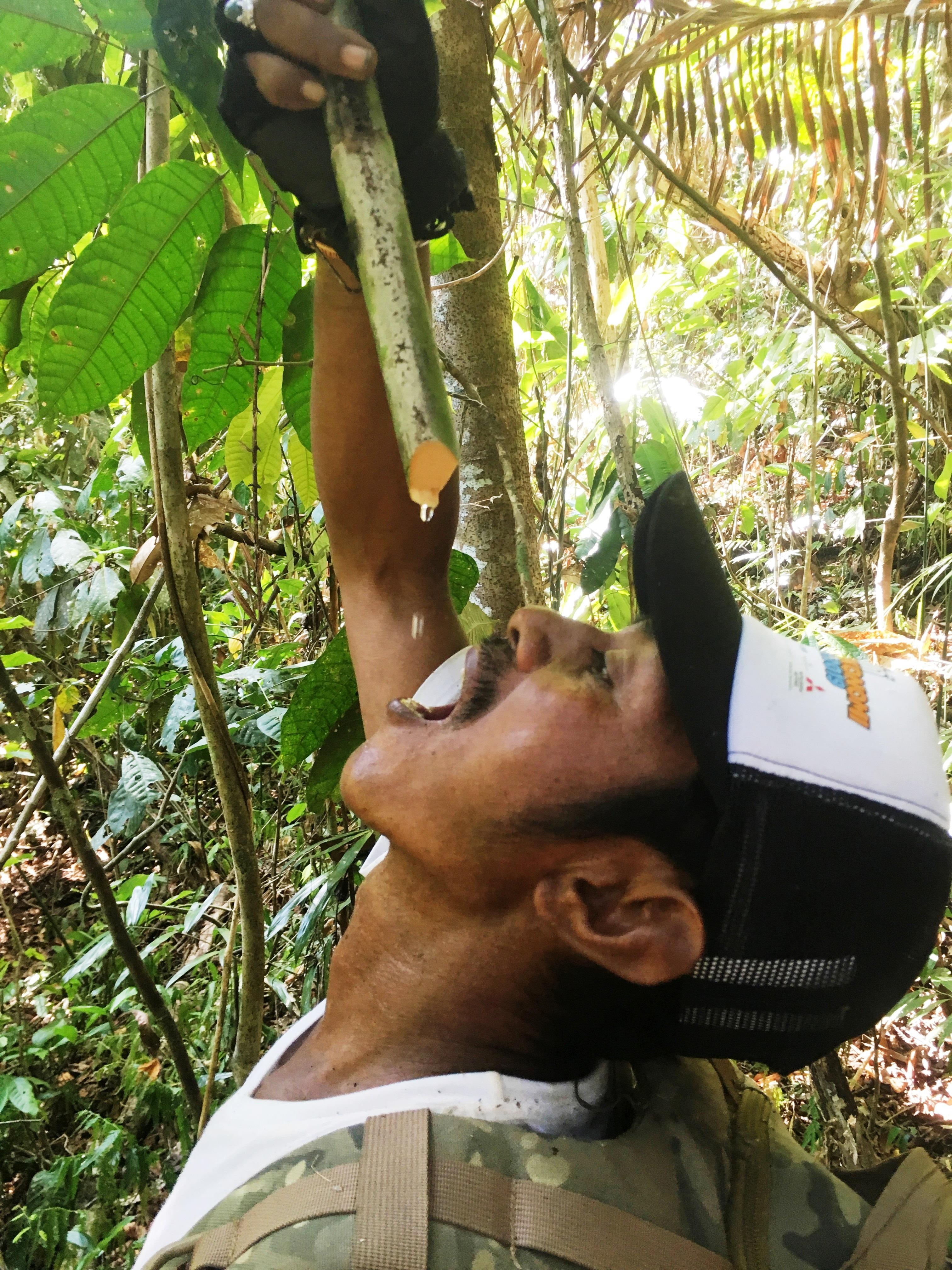 Gunung-Sabatai-Jungle-survival-–-water-from-rattan-vine-Nick-Hughes-September-2019